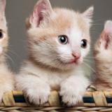 3 kleine Kätzchen (Kätzchen gehen immer)