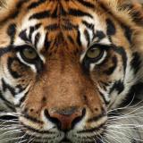 Tiger785's Bild